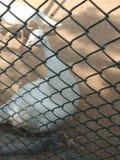 ik klik pic van vogel van mijn achternok stock foto