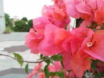 Ik ving foto's van rode bloemen stock afbeelding