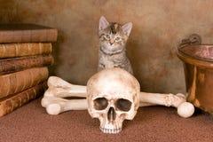 Ik wil een zwarte kat zijn Royalty-vrije Stock Afbeelding