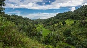 Ikalalao djungel Arkivfoton