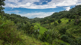 Ikalalao Jungle Stock Photos
