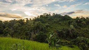 Ikalalao Jungle Royalty Free Stock Photo