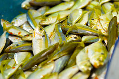Ikan Kuning. Close up of fresh Ikan Kuning on open market, selective focus Royalty Free Stock Images