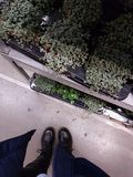 Ikea plants ft. Shoes. In ikea with some green plants and my black drMartens Royalty Free Stock Photos