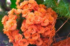 Ikebana με Kalanchoe με τα πορτοκαλιά λουλούδια και τα πράσινα φύλλα και ένα άλλο χορτάρι μέσα Στοκ Φωτογραφίες