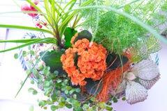 Ikebana με Kalanchoe με τα πορτοκαλιά λουλούδια και τα πράσινα φύλλα και ένα άλλο χορτάρι μέσα Στοκ φωτογραφία με δικαίωμα ελεύθερης χρήσης