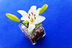 ikebana των ορχιδεών Στοκ φωτογραφία με δικαίωμα ελεύθερης χρήσης