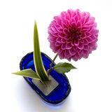 Ikebana Stock Photography
