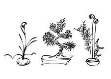 Ikebana Libre Illustration