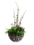 Ikebana Royalty-vrije Stock Afbeeldingen