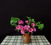 Ikebana stockfoto