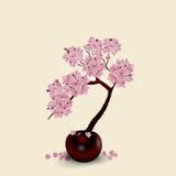 Ikebana aufbau Zahl Stoff Kirschblüte-Blume Gegen den Hintergrund lizenzfreie abbildung