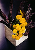 Ikebana avec la sauterelle de miel Images libres de droits