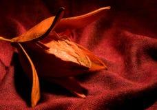 Ikebana Blume Stockfotos