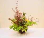 Ikebana disposizione dei fiori Fotografia Stock Libera da Diritti