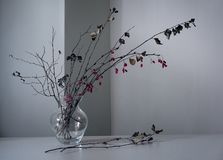 Bouquet of a barberry branch with dry twigs stock photo