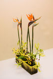 Ikebana. Flower arrangement Stock Photos