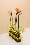 Ikebana. Flower arrangement. In the house Stock Photos