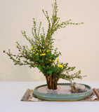Ikebana. Flower arrangement. Japanese stone garden Stock Photos