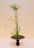 Ikebana. Flower arrangement. Of orchid in the house Stock Image