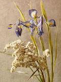 Ikebana with irises. Dried iris bouquet on the background of  textile Stock Images