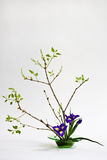 Ikebana with irises on the light background Royalty Free Stock Photos