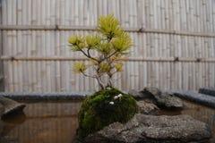 Ikebana, Japón, cultura japonesa Imágenes de archivo libres de regalías