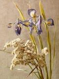 Ikebana met irissen Stock Afbeeldingen