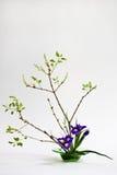 Ikebana met irissen op de lichte achtergrond Royalty-vrije Stock Foto's
