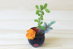 Ikebana with orange flower, branches of blue spruce and shrubs in a Cup Royalty Free Stock Photo