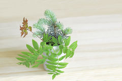 Ikebana with sprigs of spruce, ash and maple in a ceramic vase Stock Photo