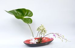 Ikebana  thai flower decoration Royalty Free Stock Photography