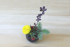 Ikebana with yellow flower, branches of blue spruce and barberry in the  blue Stock Photography