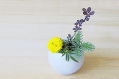 Ikebana with yellow flower, branches of blue spruce and barberry in a vase Royalty Free Stock Photography