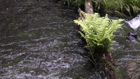 Spring water and fern stock video