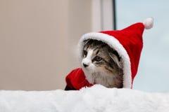 Iklädd strimmig kattkattunge en santa dräkt arkivfoto