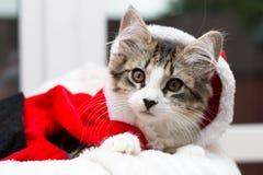 Iklädd strimmig kattkattunge en santa dräkt royaltyfria bilder