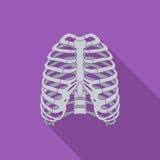 Ikona ludzki thorax Zdjęcie Stock