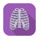 Ikona ludzki thorax Fotografia Royalty Free