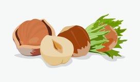 Ikona malujący hazelnut leszczyny również zwrócić corel ilustracji wektora Fotografia Stock
