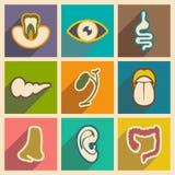 Ikone von Versammlungsinneren organen in der flachen Art Lizenzfreies Stockbild