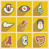 Ikone von Versammlungsinneren organen in der flachen Art Stockbilder