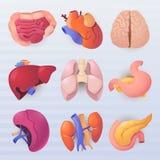 Ikonen der menschlichen Organe lizenzfreie abbildung