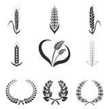 Ikonen des Weizens, Roggen, Maisvektorillustration Stockbilder