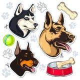 Ikonen färbten Hund, Schäfer, Schlittenhund, Dobermann und eine Schüssel des Knochens Lizenzfreie Stockfotos