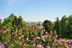 Ikonenhafte Ansicht zu einem Kloster Vydubitsky und zu Dnieper-Fluss von einem botanischen Garten von Kyiv mit blühender Flieder Lizenzfreie Stockbilder