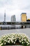 Ikonenhafte Gebäude, wie von Sumida-Park gesehen lizenzfreie stockfotos