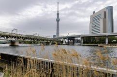 Ikonenhafte Gebäude, wie von Sumida-Park gesehen stockfoto