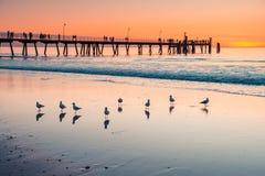 Ikonenhafter Glenelg-Strand mit Anlegestelle bei Sonnenuntergang stockfoto