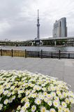 Ikonowi budynki jak widzieć od Sumida parka zdjęcie stock